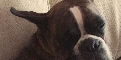 Sleepytime for Daisy